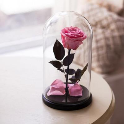 Вечная роза в колбе, высота 26 см, цвета на выбор
